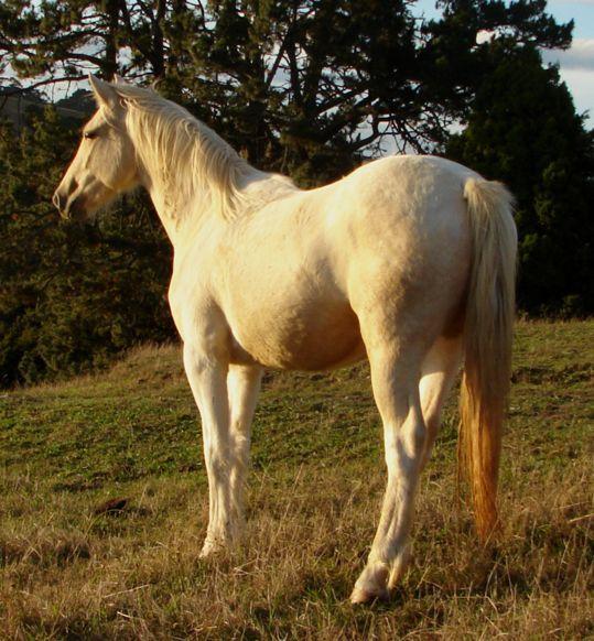 palomino unicorn by suncloud14 - photo #12