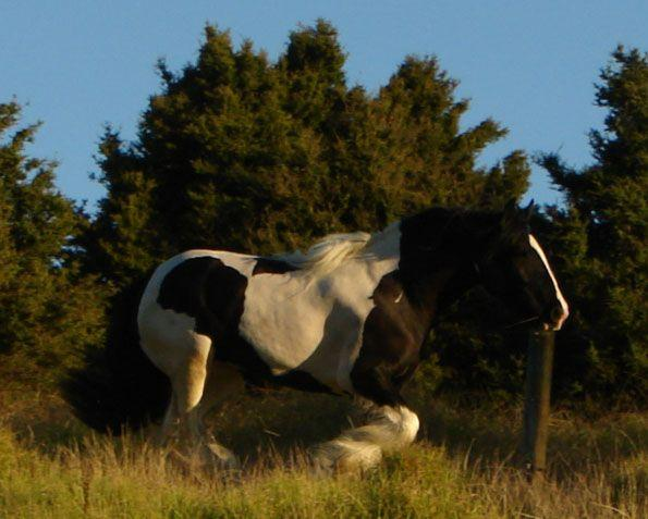 www.gypsyvanner.co.nz