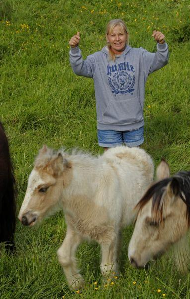 buckskin gypsy vanner filly for sale