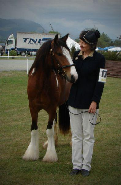 quality partbred gypsy vanner